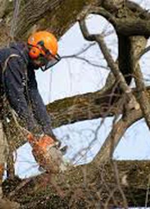 Спил деревьев, вывоз, веток, благоустройство участков,