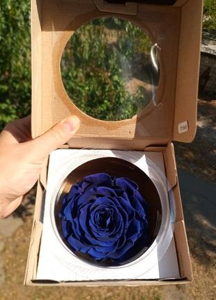 Новая в коробке стабилизированная, вечная роза, бархатная синя...
