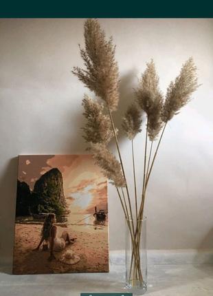 Тростниковый камыш тростник пампасная трава сухоцветы букет