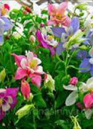 Семена цветов однолетних, многолетних разных сортов
