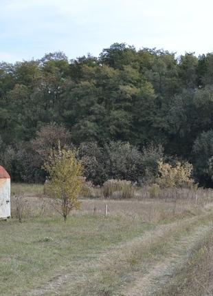 Участок для дома 32 сотки под лесом в Андреевке Бориспольский ...