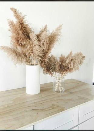 Тростник декор пампасная трава сухоцвет кортадерия камыш