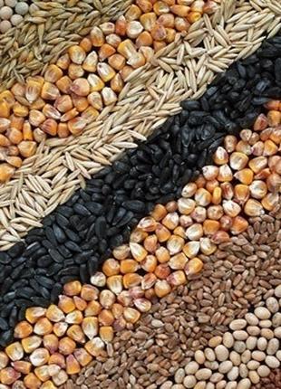 Зерносмесь (Ячмень+пшеница+кукуруза)