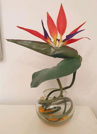Ваза с цветком Стрелиция