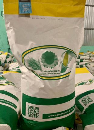 Семена кукурузы ДН Хортица (ФАО 240). Урожай 2020г.