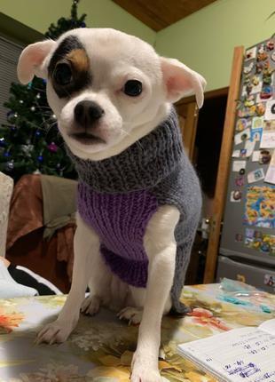 Жилет для собак / жилетка для собак / одежда для собак и котов