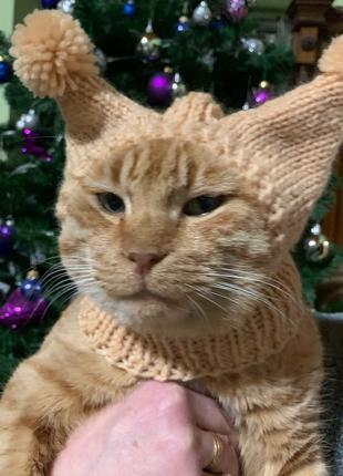 шапка для кота / шапочка для кота / шапки для котов