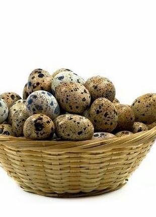 Яйца перепелиные упаковка 20 шт.