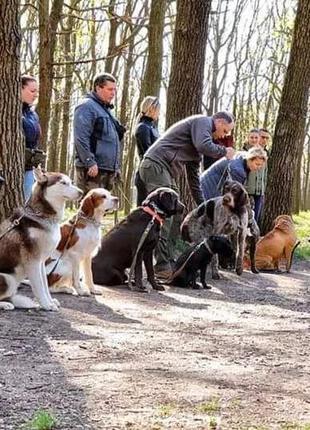 Дрессировка и передержка собак профессиональными кинологами