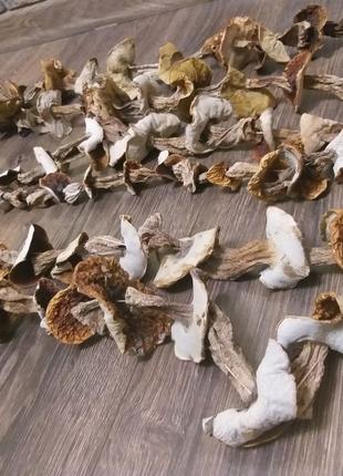 Білі гриби,Белые грибы