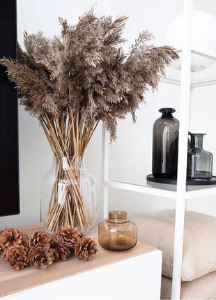 Пампасная трава 8 веток pampas grass Кортадерия тростник Сухоцвет