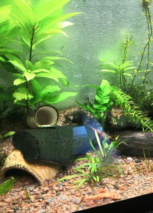 Акваріумні рослинки