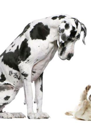 Вигуляю собаку в місті Коломия