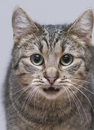 Отдам в хорошие руки чудесного молодого котика Гарика