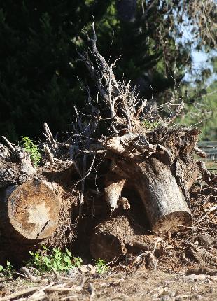 Выкорчевать пень. Удалить дерево. Удаление корней дерева