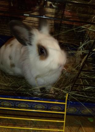 Кролик декларативный