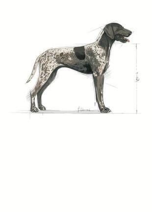 Продам (скидка 10%) Royal Canin Maxi digestive care