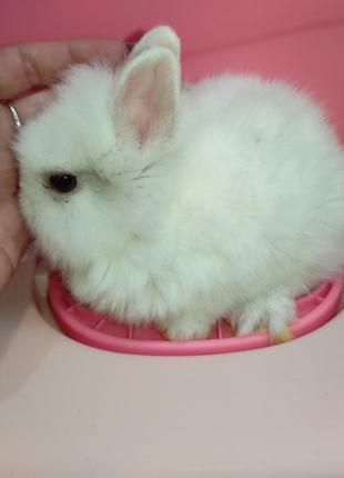 Белоснежная торчеухая декоративная девочка  мини кролик. Малыш...