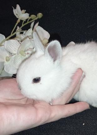 Кролики декоративные . Продам крольчат. Клетки для кроликов