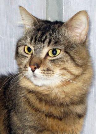 Крупный, здоровый, тяжелый, молодой камышовый котик ЖАН, 1,5 года