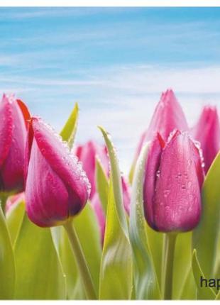 Фотообои Престиж Малиновые тюльпаны №11 влагостойкие