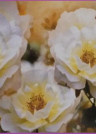 Фотообои Престиж Букет чайных роз №31 влагостойкие