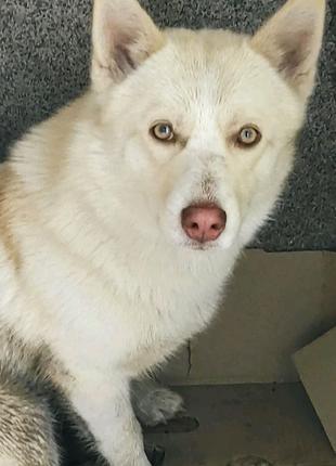 Пропала, найдена собака