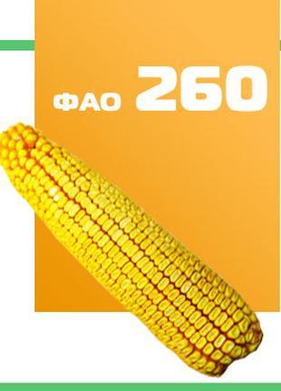 Кукуруза ДН Фиеста ФАО 260