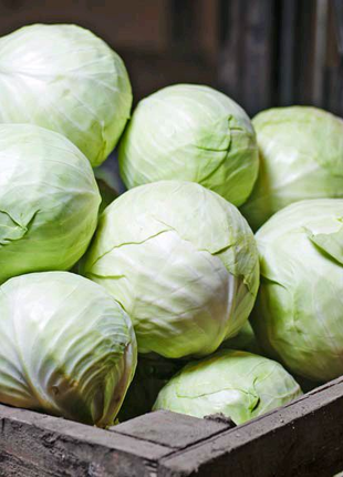 Капуста Зорро (семена 100 шт) 3 грн