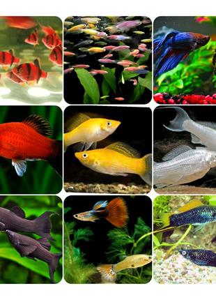 Рибки , акваріумні рибки , аквариумные рыбки