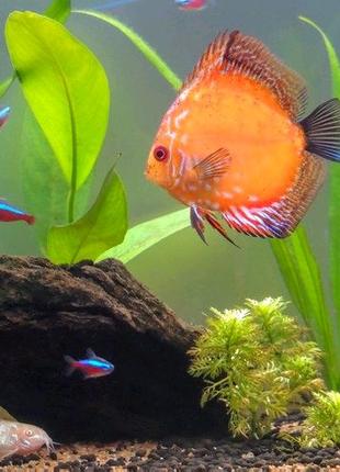 Аквариумист чистка аквариума