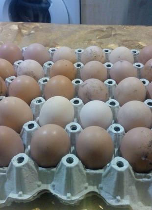 Яйца домашние куриные очень вкусные