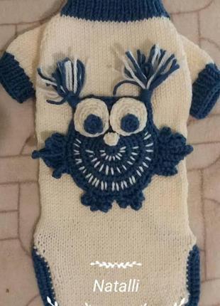 Яркий свитер для маленькой собаки