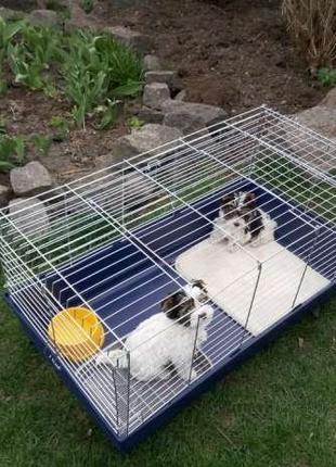 Клетка для собак, кошек, щенков, котят, кролика, хорька 100х54х45