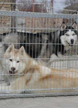 Переноска, вольер, клетка для собак №7, 118х70х80 волк-3