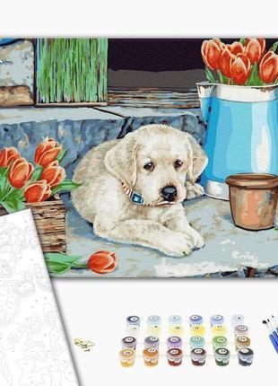 Картина по номерам щенок лабрадора