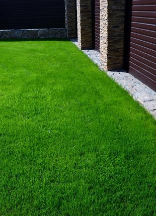 Мятлик(семена),газон