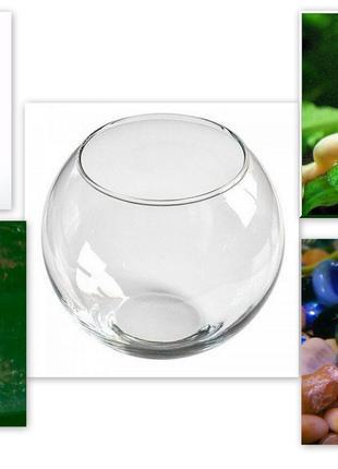 Покупайте маленький мир шпорцевых лягушек(3шт) с круглым аквариум