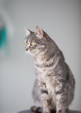 Стеша - юная принцесса кошка в добрые руки Киев