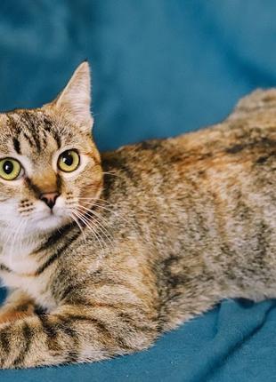 Нола и Трина- котята-сестрички в добрые руки