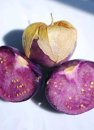 Физалис пурпурный (семена 30 шт) 5 грн