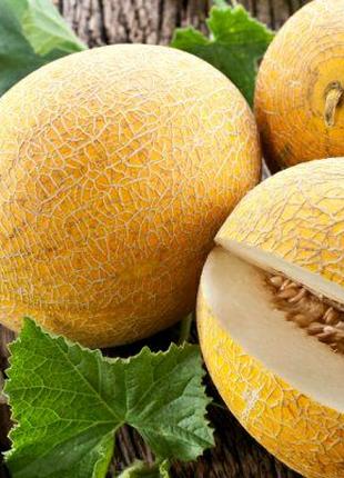 Дыня Титовка (семена 20 шт) 3 грн