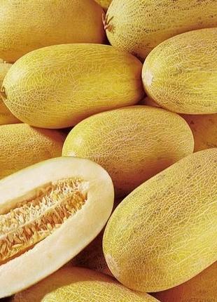 Дыня Крымчанка (семена 30 шт) 3 грн