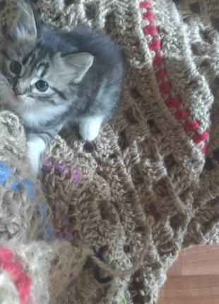 Отдам котенка. комочек счастья для Вашего дома.