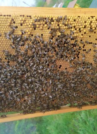 Бджолопакети доставка по Україні