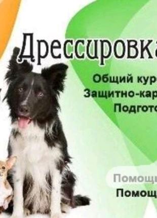 Проффесиональная Дрессировка собак!