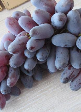 Саженцы винограда Лучших сортов