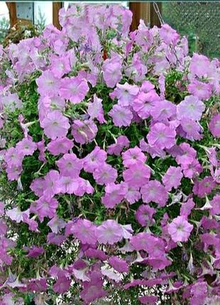 Петуния фиолетовая (семена 0,05г) 5 грн