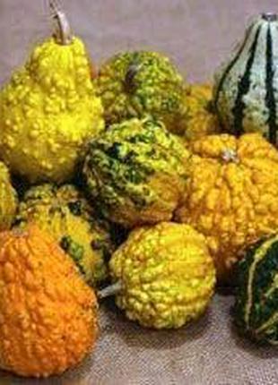 Декоративные гарбузики семена