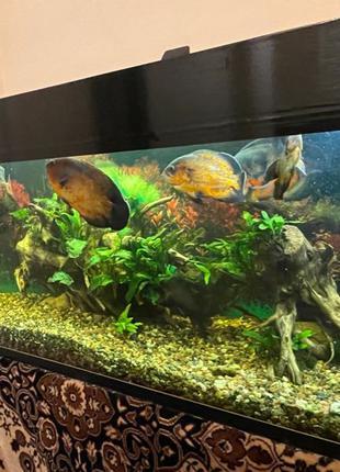 аквариум 400 л